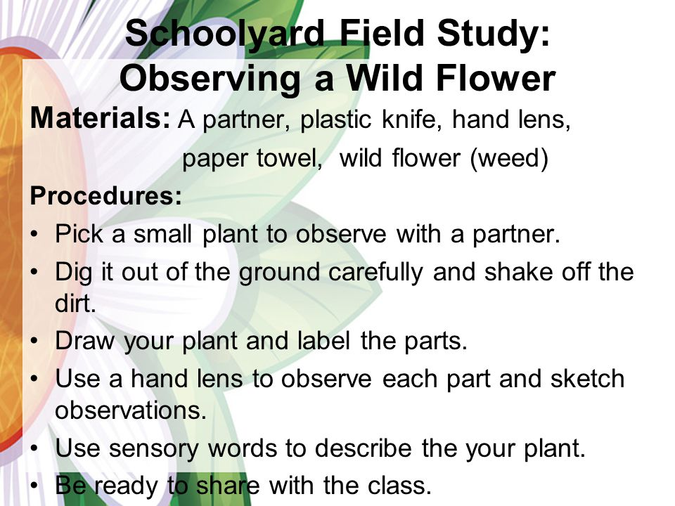 Schoolyard Field Study: Observing a Wild Flower