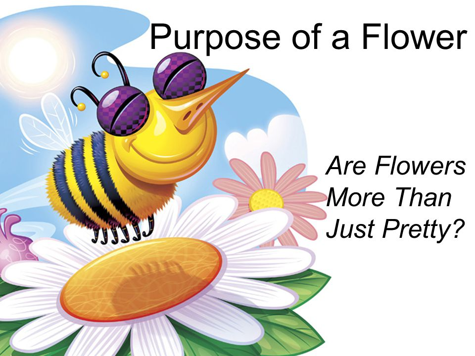 Purpose of a Flower Are Flowers More Than Just Pretty