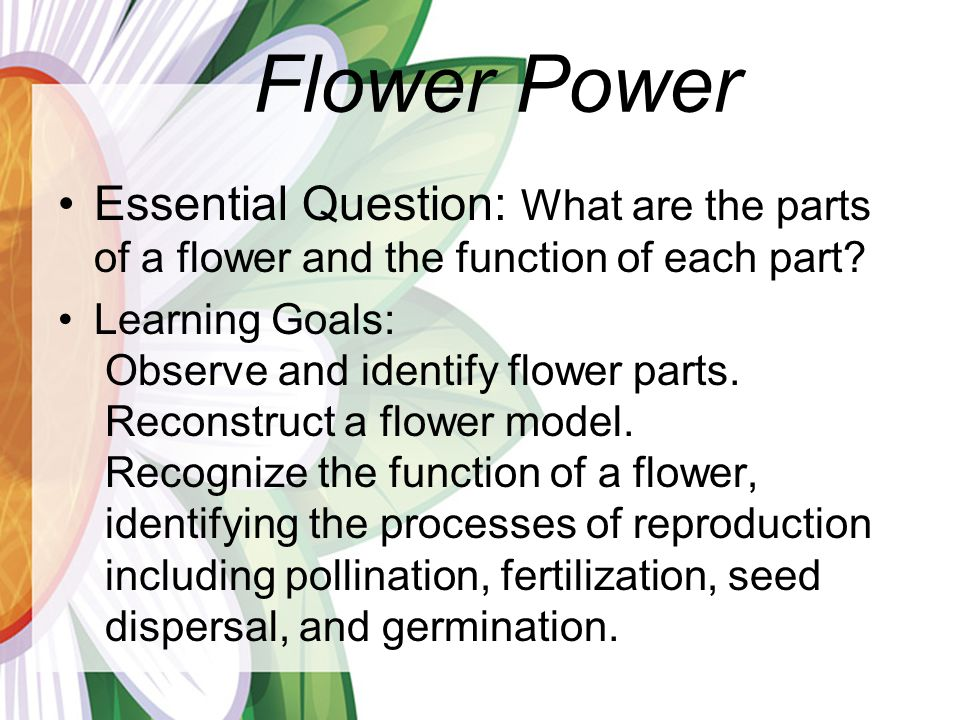 Flower Power Essential Question: What are the parts of a flower and the function of each part Learning Goals:
