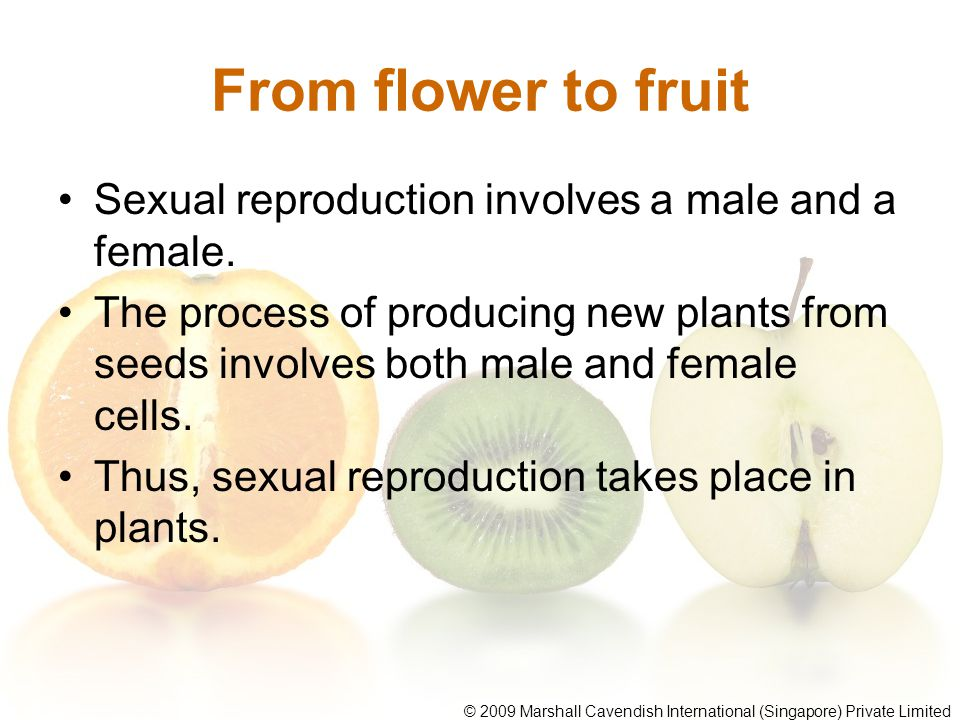From flower to fruit Sexual reproduction involves a male and a female.