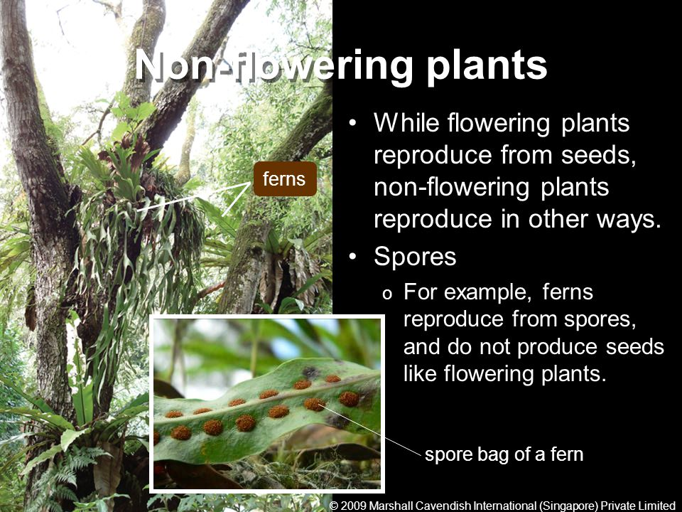 Non-flowering plants While flowering plants reproduce from seeds, non-flowering plants reproduce in other ways.