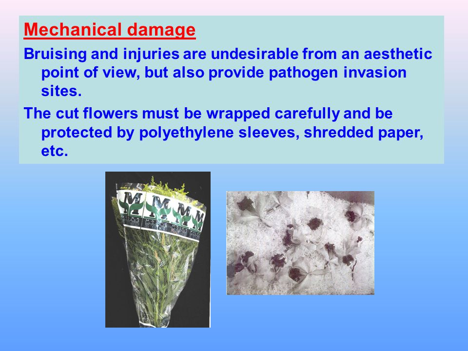 Mechanical damage Bruising and injuries are undesirable from an aesthetic point of view, but also provide pathogen invasion sites.