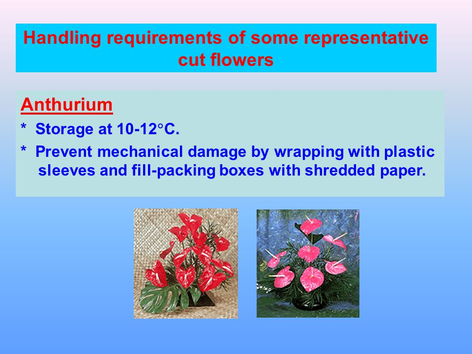 Handling requirements of some representative cut flowers