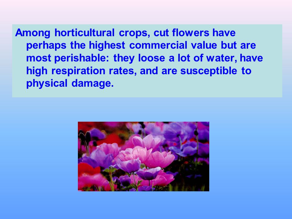 Among horticultural crops, cut flowers have perhaps the highest commercial value but are most perishable: they loose a lot of water, have high respiration rates, and are susceptible to physical damage.