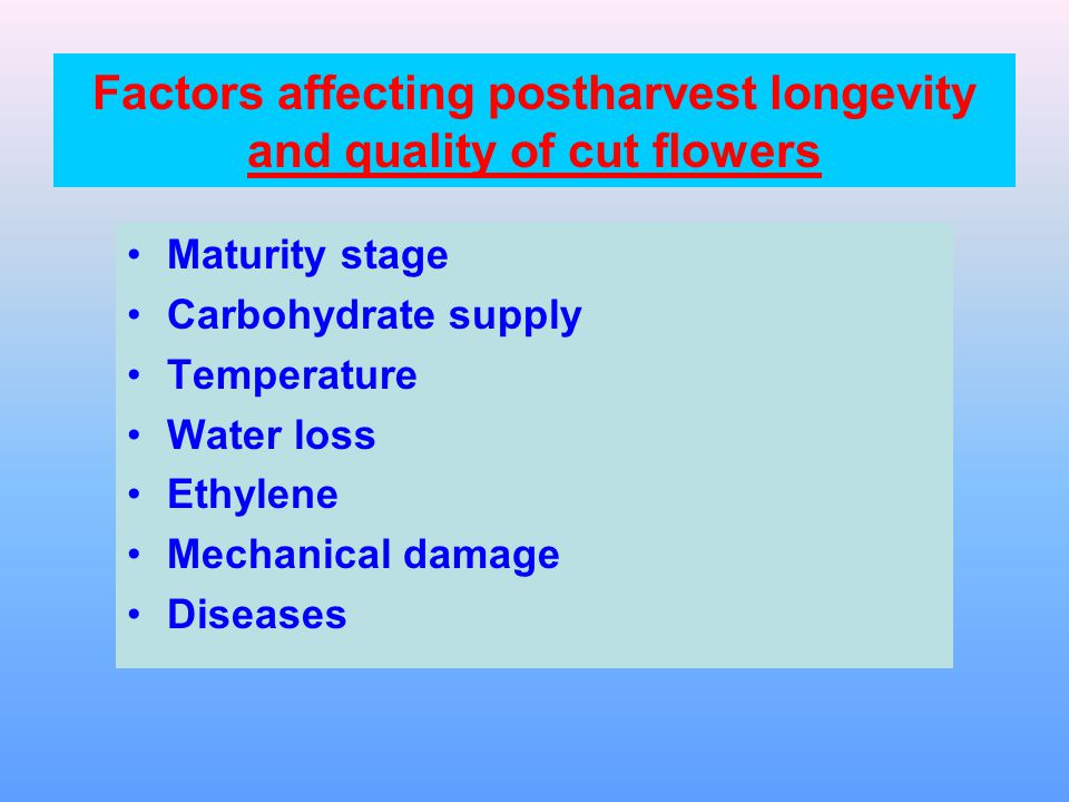Factors affecting postharvest longevity and quality of cut flowers