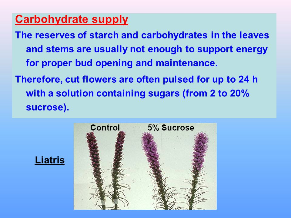 Carbohydrate supply