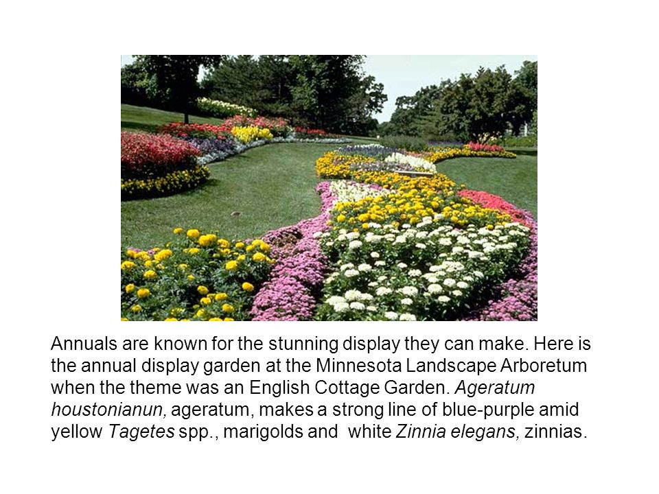 Annuals are known for the stunning display they can make