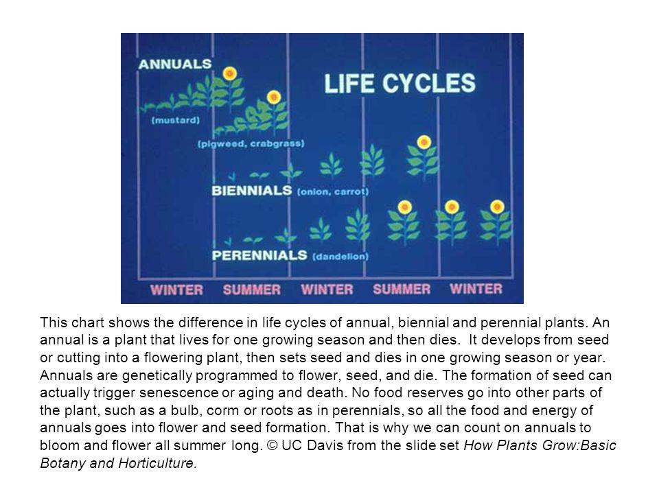 This chart shows the difference in life cycles of annual, biennial and perennial plants.