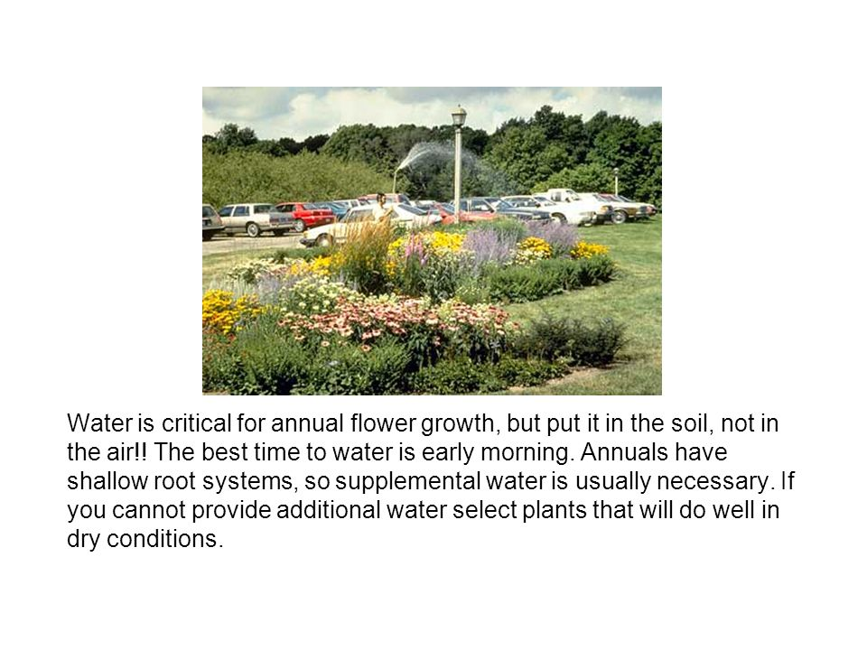 Water is critical for annual flower growth, but put it in the soil, not in the air!.