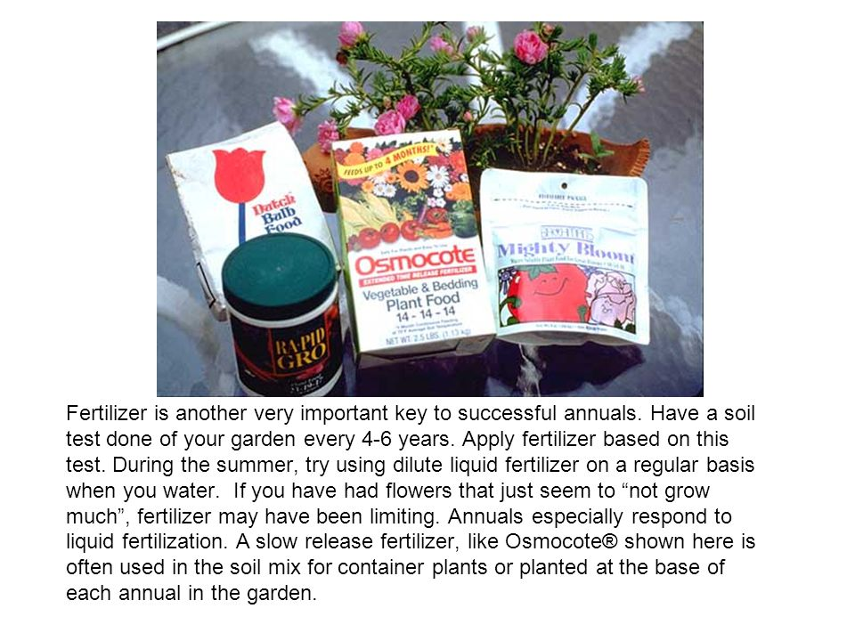Fertilizer is another very important key to successful annuals