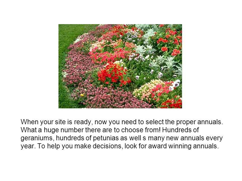 When your site is ready, now you need to select the proper annuals
