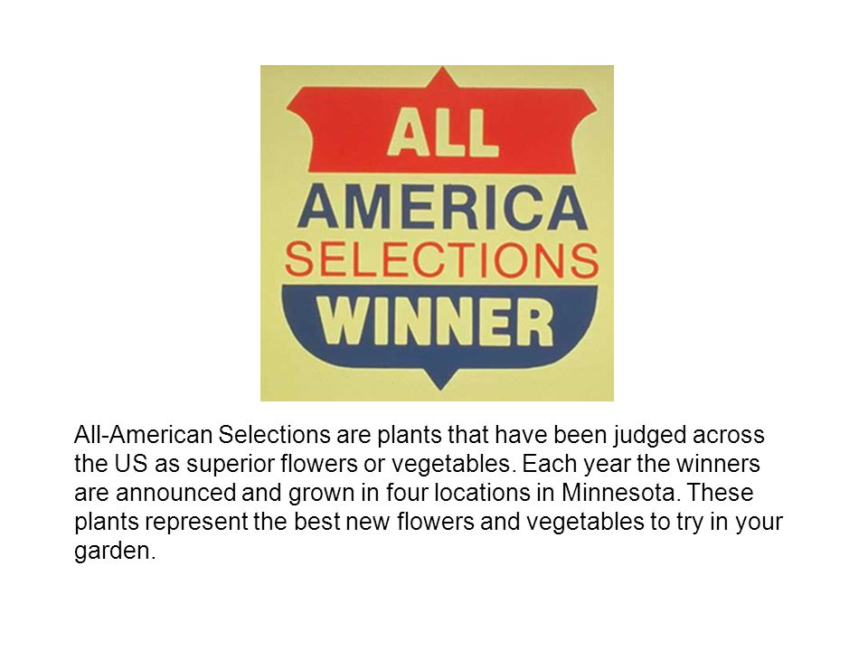 All-American Selections are plants that have been judged across the US as superior flowers or vegetables.