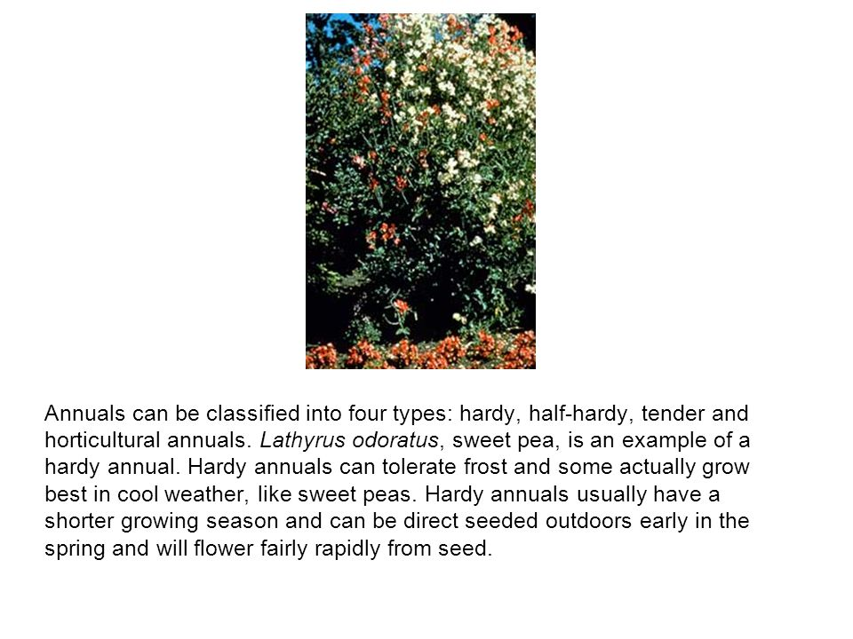 Annuals can be classified into four types: hardy, half-hardy, tender and horticultural annuals.