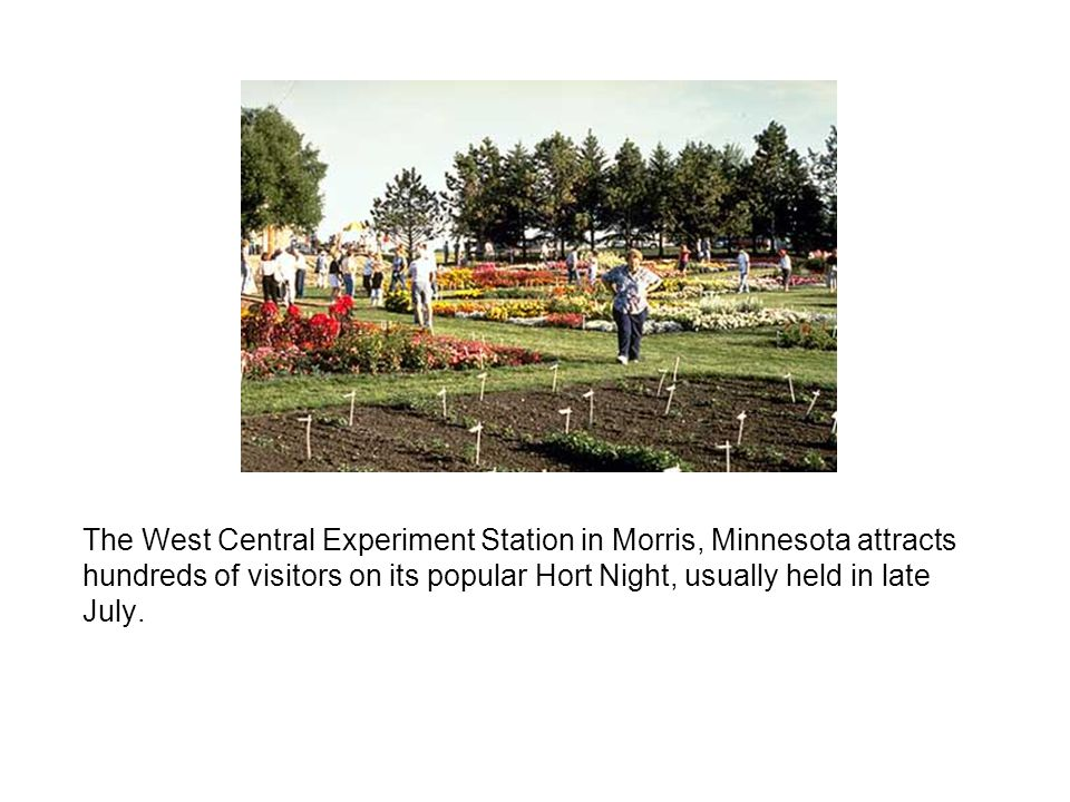 The West Central Experiment Station in Morris, Minnesota attracts hundreds of visitors on its popular Hort Night, usually held in late July.