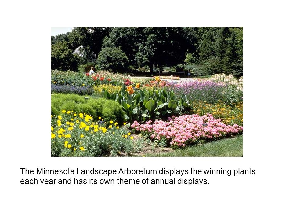 The Minnesota Landscape Arboretum displays the winning plants each year and has its own theme of annual displays.
