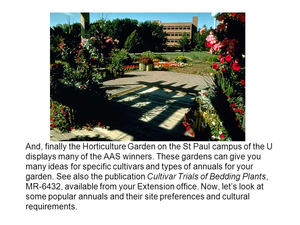 And, finally the Horticulture Garden on the St Paul campus of the U displays many of the AAS winners.