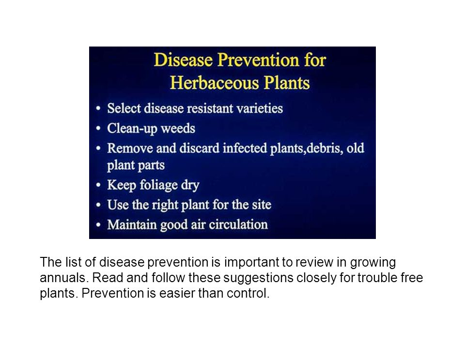 The list of disease prevention is important to review in growing annuals.