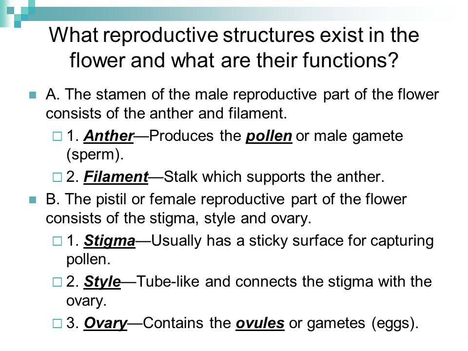 What reproductive structures exist in the flower and what are their functions