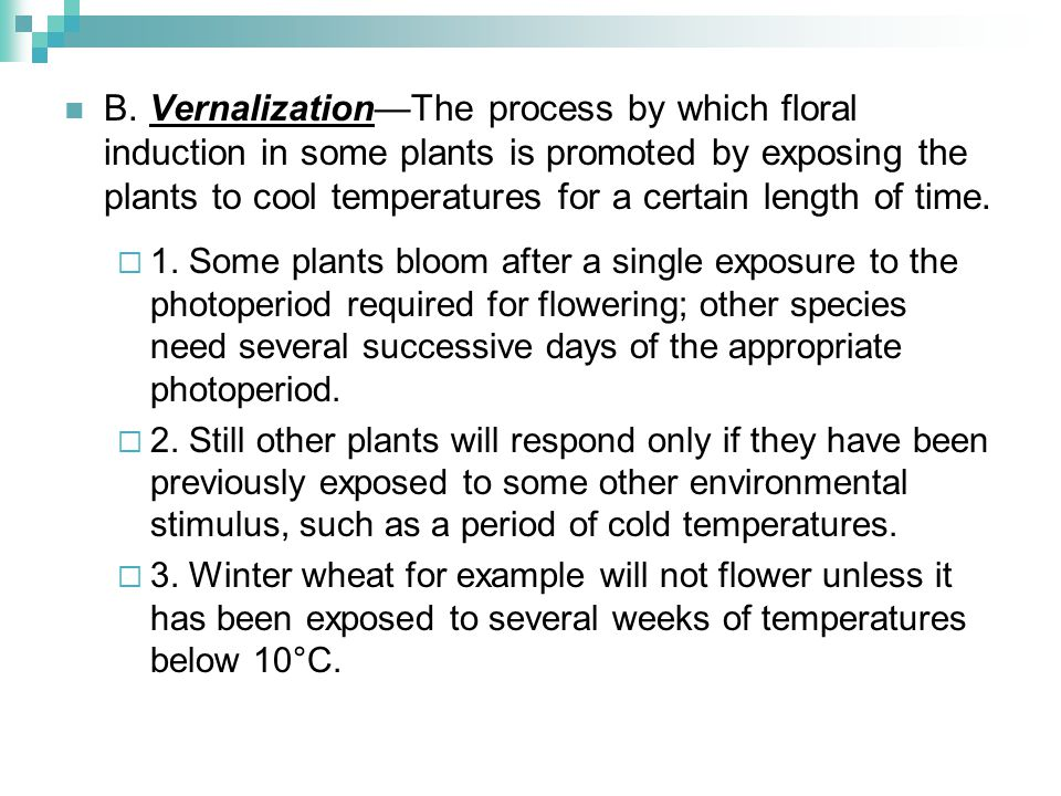 B. Vernalization—The process by which floral induction in some plants is promoted by exposing the plants to cool temperatures for a certain length of time.