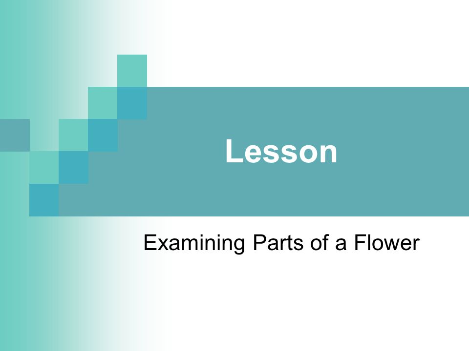Examining Parts of a Flower