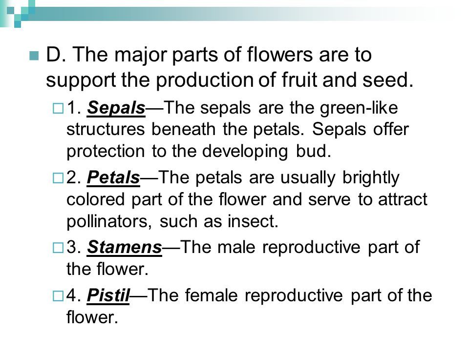 D. The major parts of flowers are to support the production of fruit and seed.