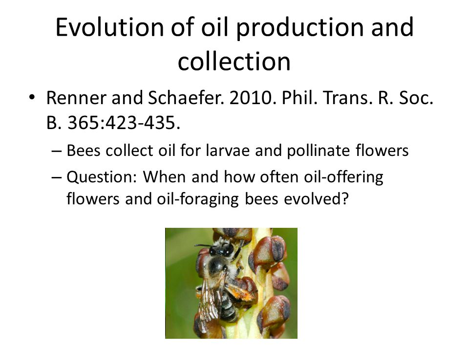 Evolution of oil production and collection