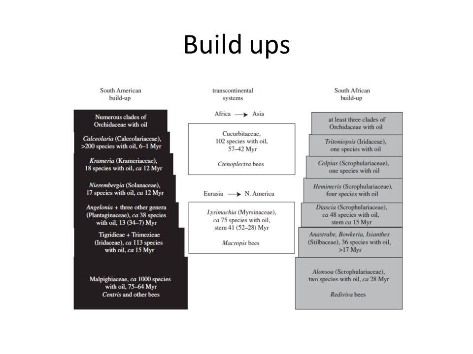 Build ups