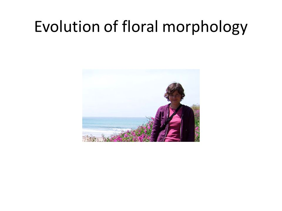 Evolution of floral morphology