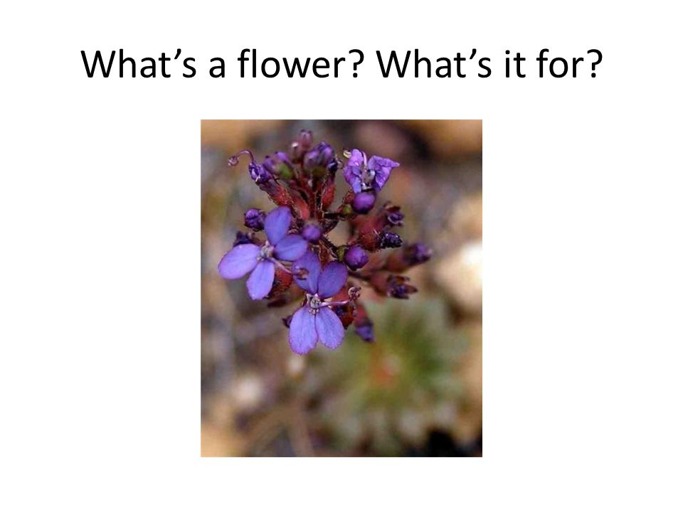 What's a flower What's it for
