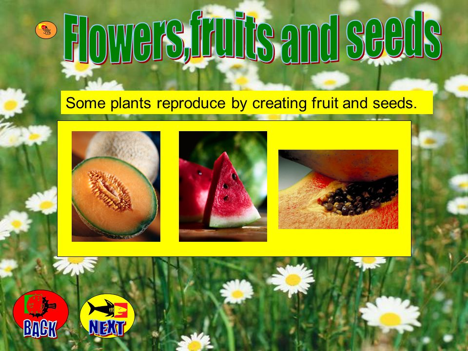 Flowers,fruits and seeds