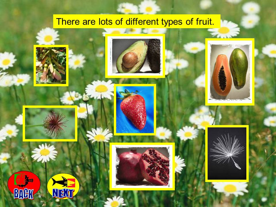 There are lots of different types of fruit.