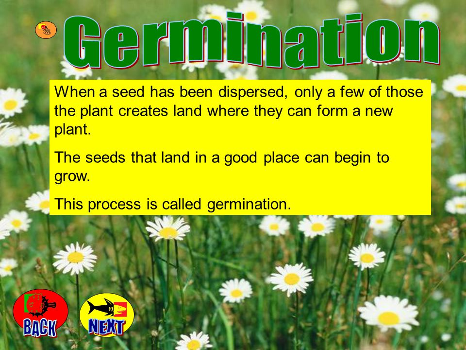 Germination When a seed has been dispersed, only a few of those the plant creates land where they can form a new plant.