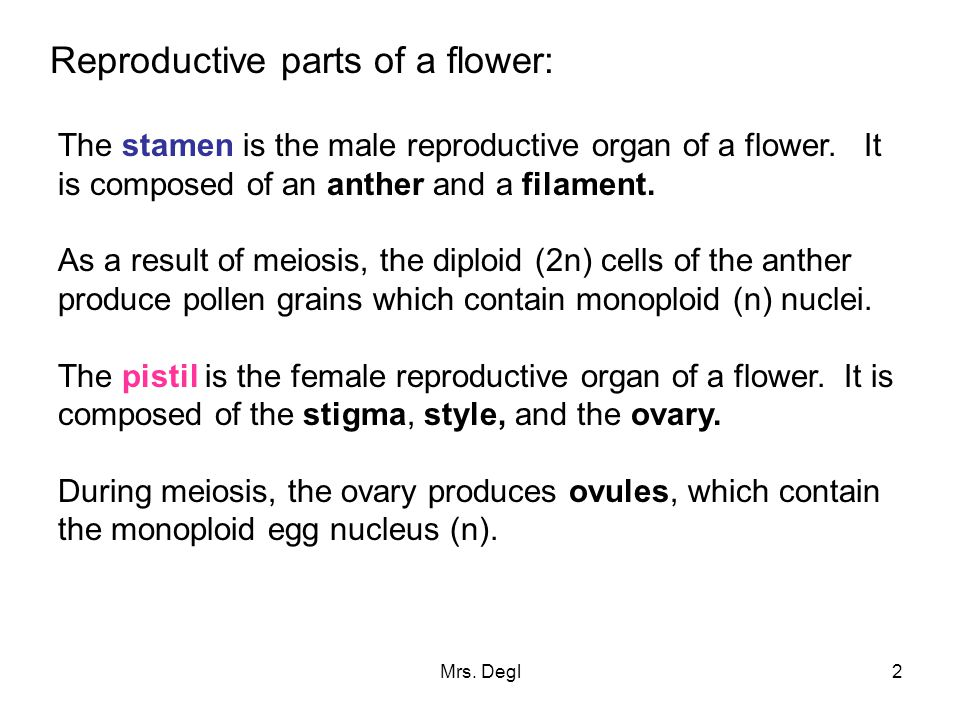 Reproductive parts of a flower: