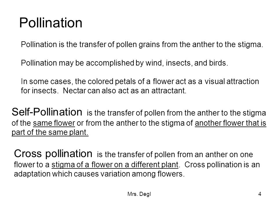 Pollination Pollination is the transfer of pollen grains from the anther to the stigma. Pollination may be accomplished by wind, insects, and birds.
