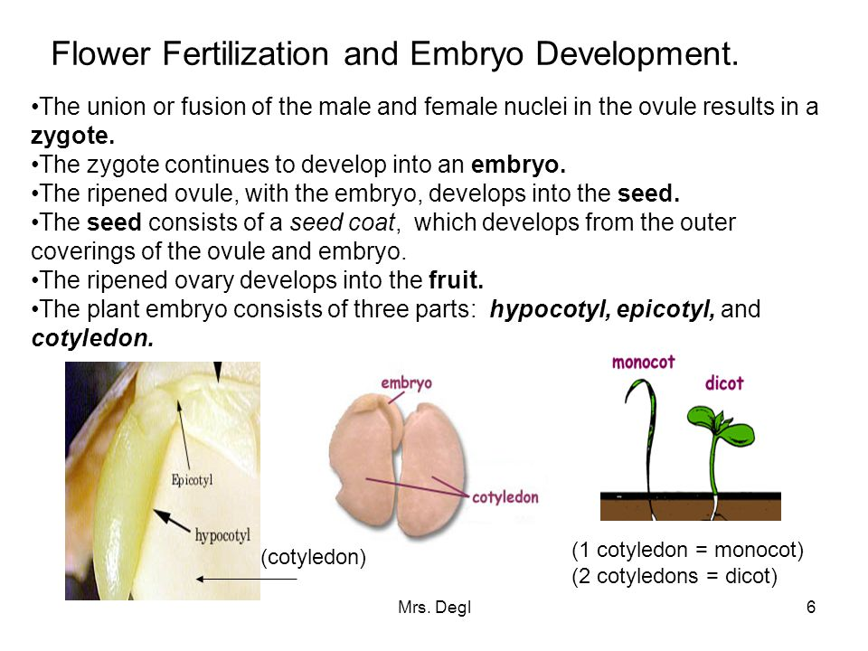 Flower Fertilization and Embryo Development.