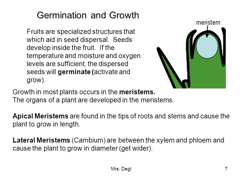 Germination and Growth