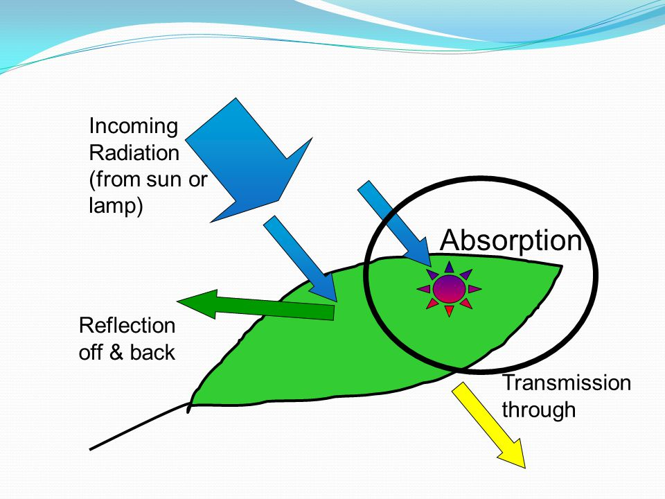 Absorption Incoming Radiation (from sun or lamp) Reflection off & back