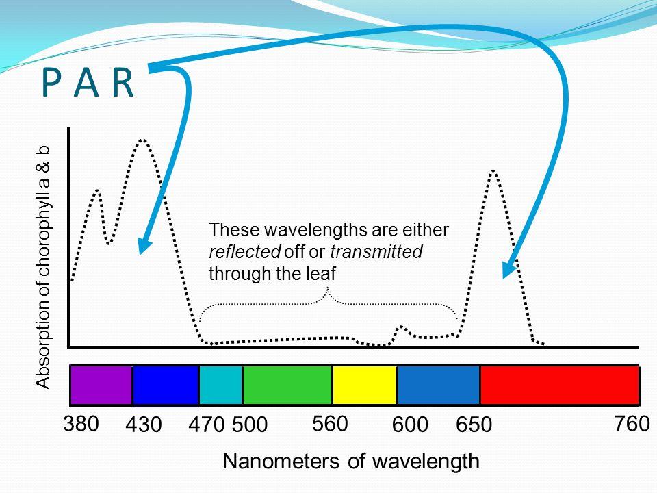 P A R 380 430 470 500 560 600 650 760 Nanometers of wavelength