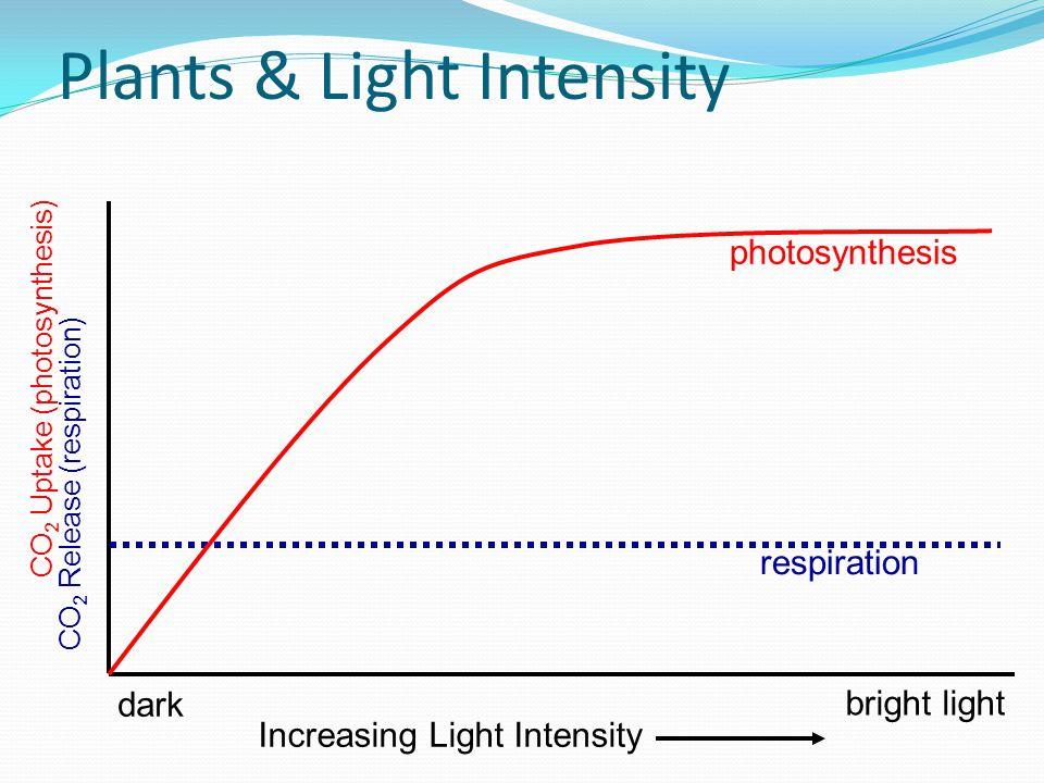 Plants & Light Intensity