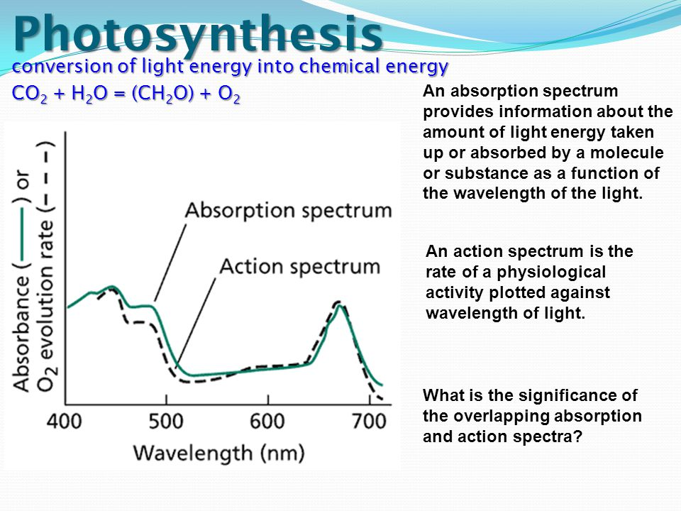 Photosynthesis conversion of light energy into chemical energy