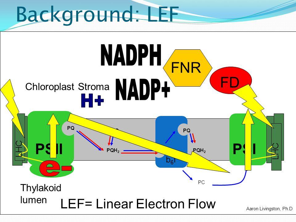 Background: LEF NADPH FNR FD NADP+ H+ PSII PSI e-