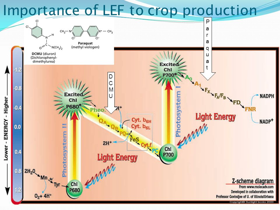 Importance of LEF to crop production