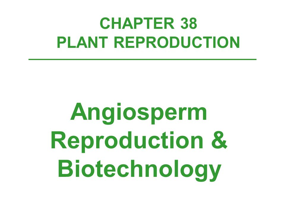 CHAPTER 38 PLANT REPRODUCTION Angiosperm Reproduction & Biotechnology