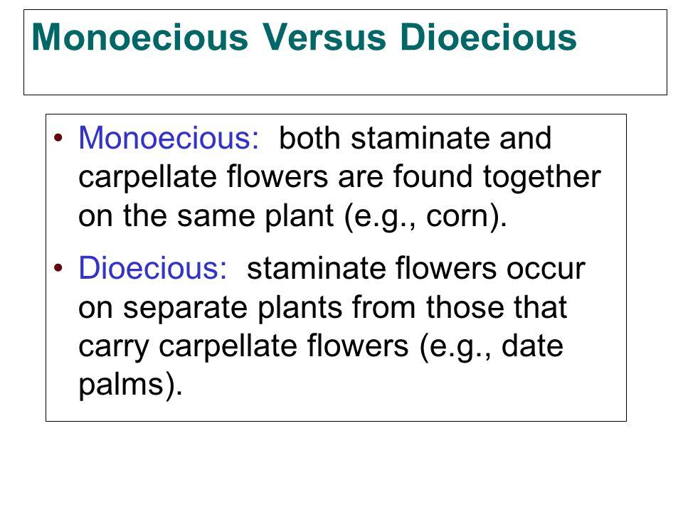 Monoecious Versus Dioecious