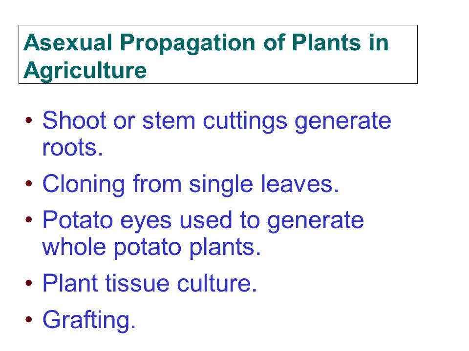 Asexual Propagation of Plants in Agriculture
