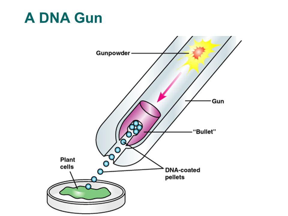 A DNA Gun