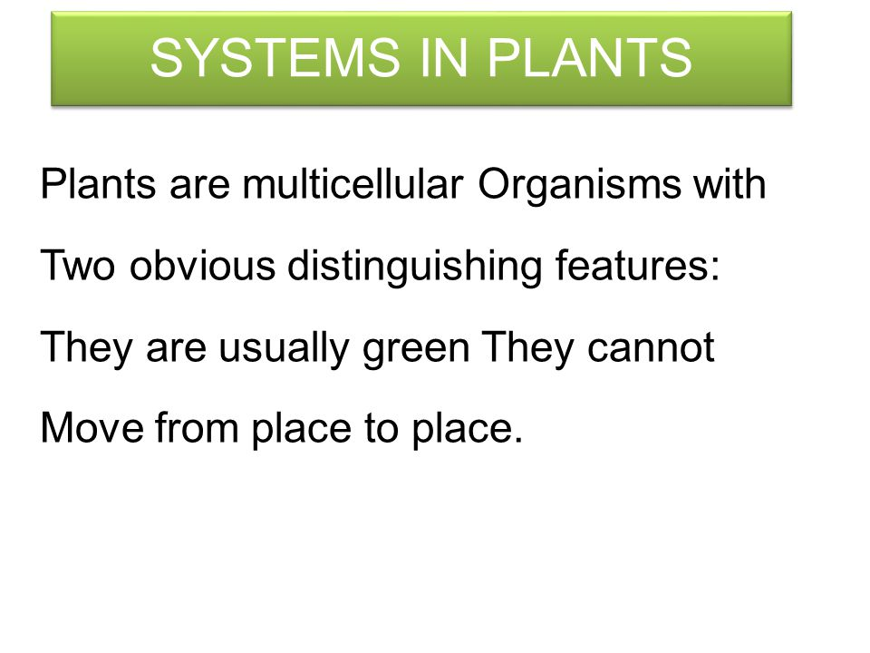 SYSTEMS IN PLANTS Plants are multicellular Organisms with