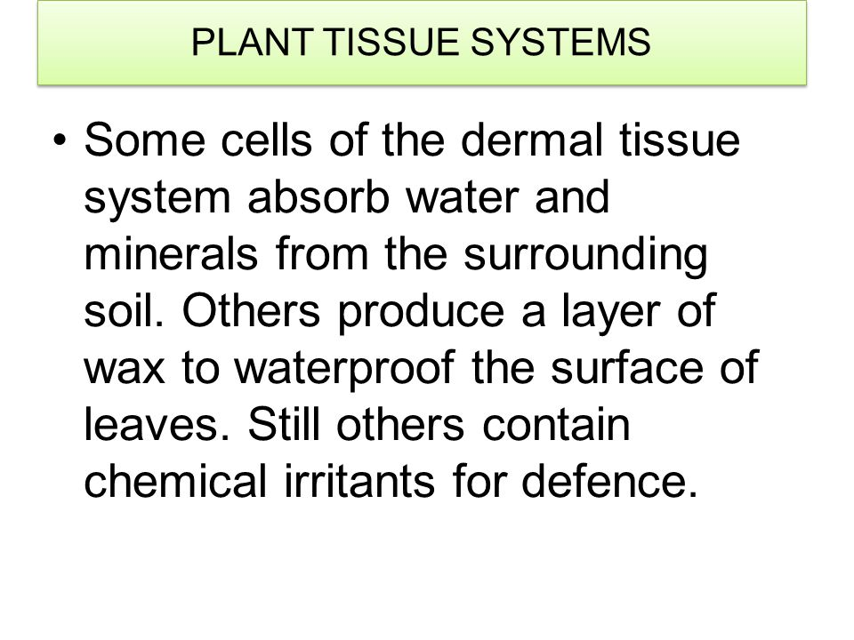 PLANT TISSUE SYSTEMS