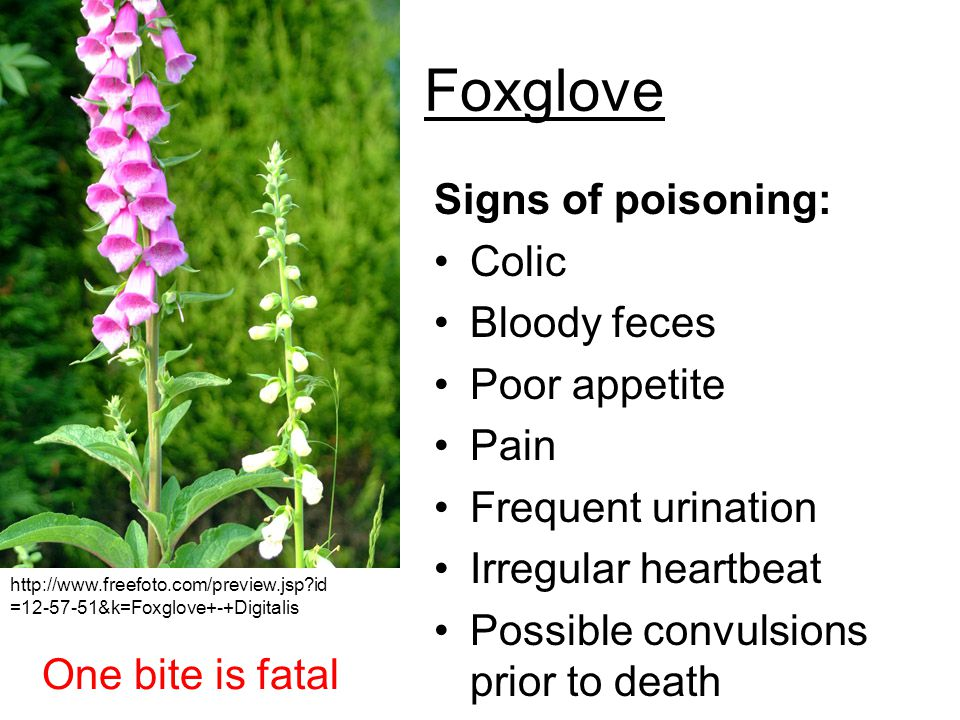 Foxglove Signs of poisoning: Colic Bloody feces Poor appetite Pain