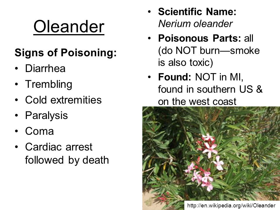 Oleander Signs of Poisoning: Diarrhea Trembling Cold extremities